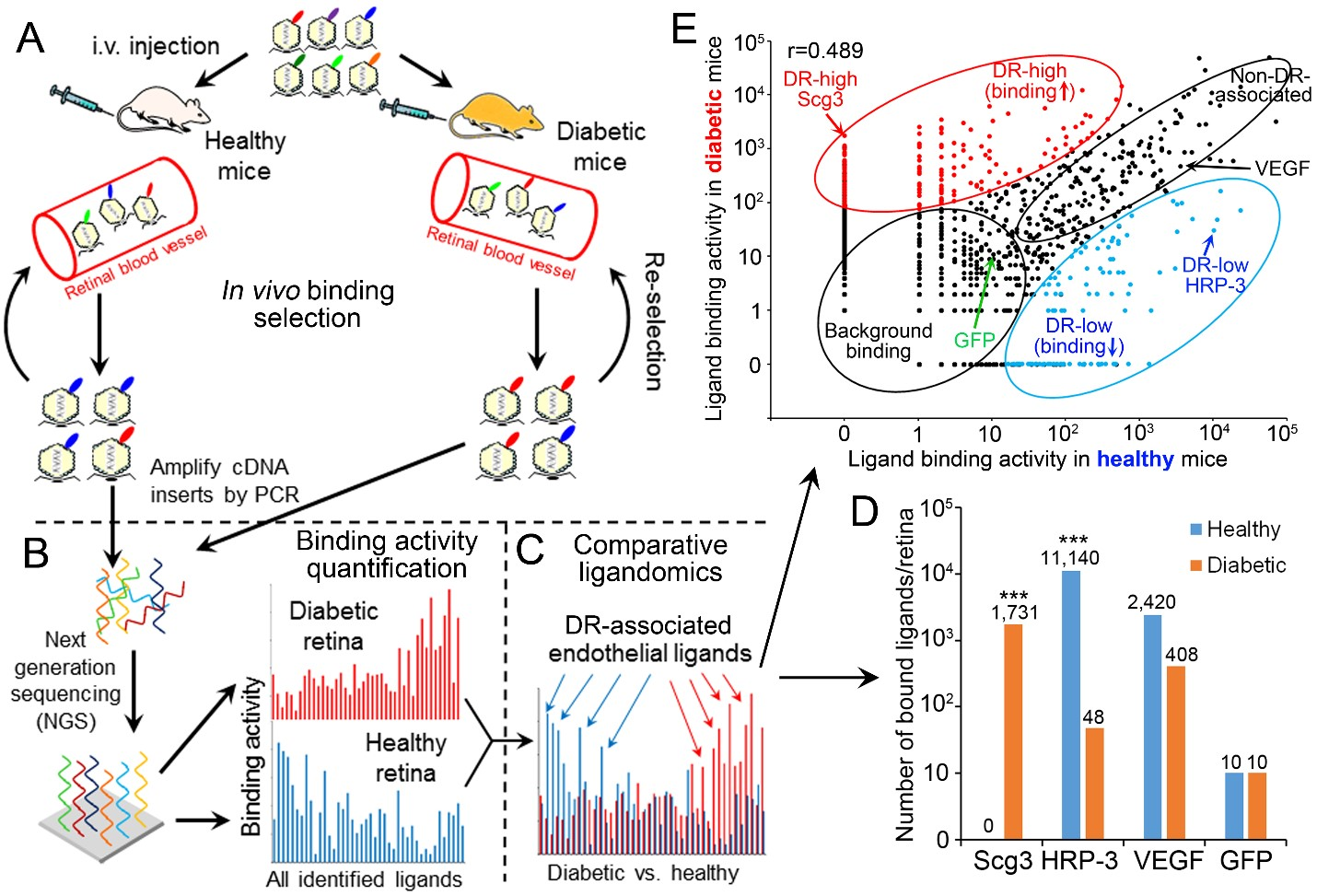 Comparative ligandomics to systematically identify disease-associated endothelial ligands by in vivo binding selection